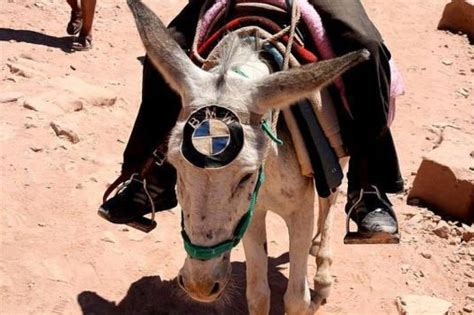 4x4 Rug Bmw Donkey Really Funny Pictures Collection On Picshag Com