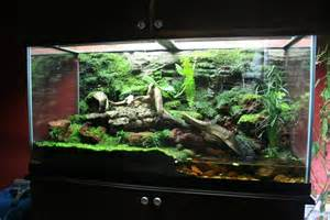 terrarium on pinterest vivarium aquarium and aquascaping