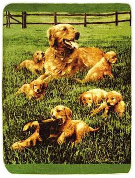 golden retriever family golden retriever family blanket throw