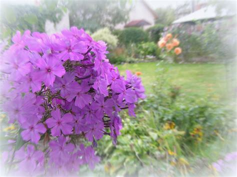 love lives in the garden late summer blooming flowers