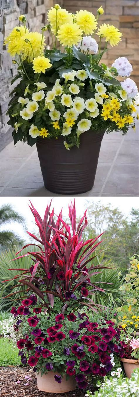 25 best ideas about small potted plants on pinterest container garden ideas archives gardening ideas