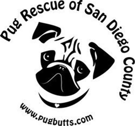 san diego pugs pug rescue of san diego county presents pugs chugs kpbs