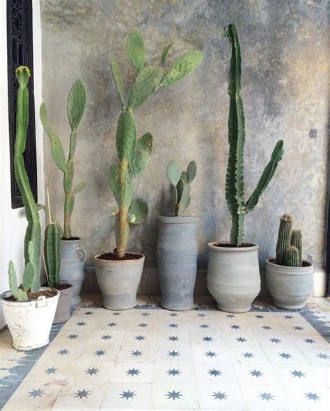 Interior Species by Best 25 Indoor Cactus Ideas On Indoor Cactus
