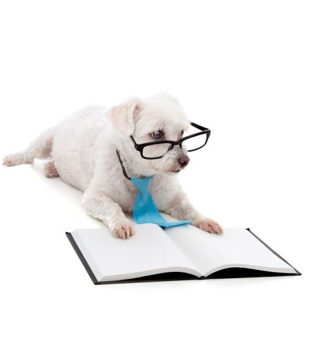 smart puppy and puppy courses stop barking and instill obedience