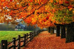 tree leaves mirrored colorful branches road path shine foliage glow autumn fall nature colors