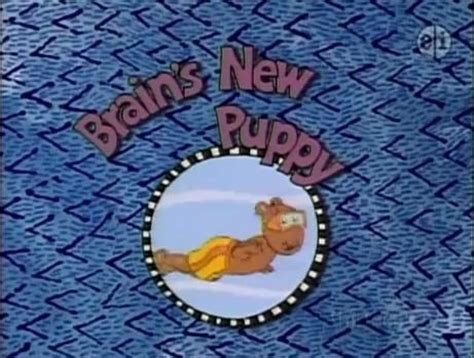 arthur s new puppy brain s new puppy arthur wiki