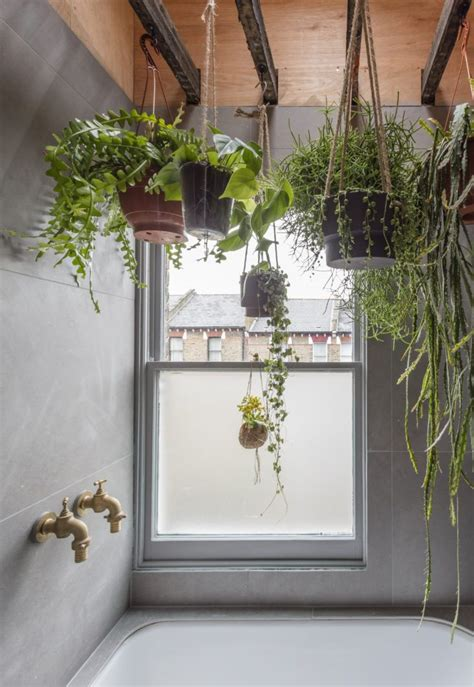 bathroom hanging plants best 25 small indoor plants ideas on pinterest