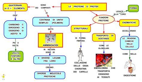alimenti con aminoacidi le proteine i protidi