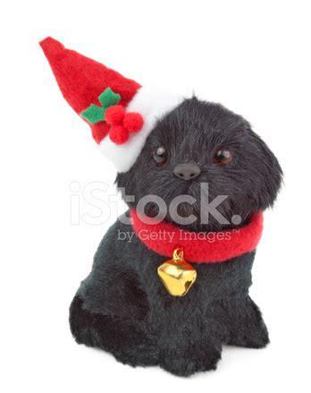 annapolis maryland black dog christmas ornament black ornament stock photos freeimages