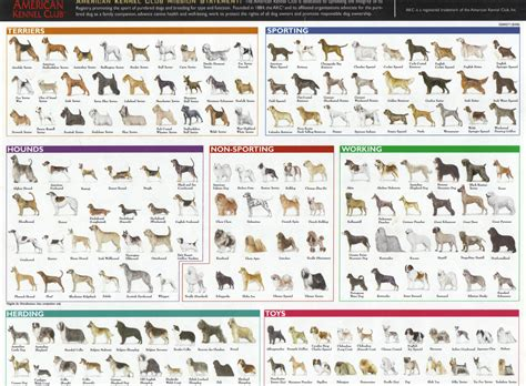 dogs and breeds evolutionary thinking 171 evolutionevidence org a new method for teaching evolution