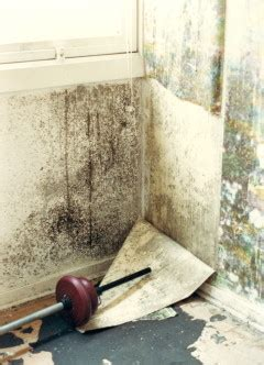 section 82 environmental protection act mould growth consultants ltd about mould and mgc products