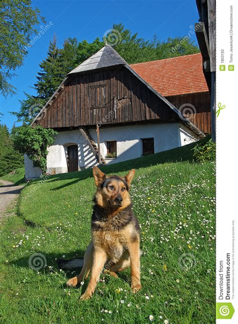 german shepherd dog house german shepherd dog stock photos image 1803193