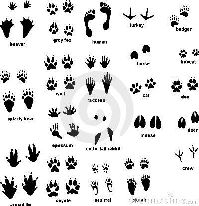 printable animal footprints wild animal footprints animal tracks with front and rear