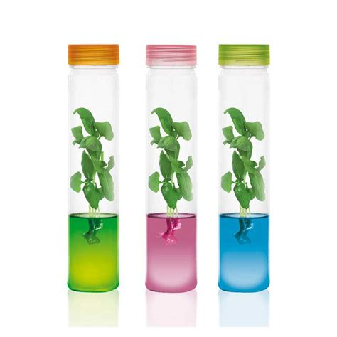 Growing Pet Type 2 plantarium pet plants grow in gel interactive