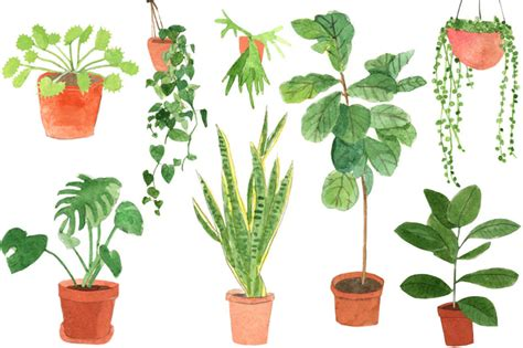 house plants a guide to house plants