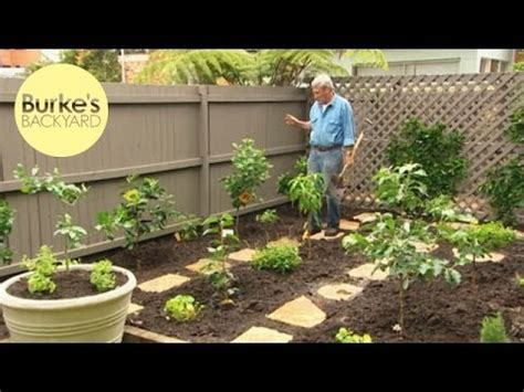fruit trees for small backyards burke s backyard dwarf fruit tree makeover youtube