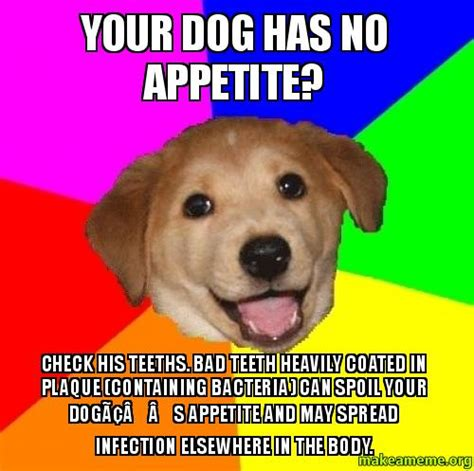 Dog Teeth Meme - your dog has no appetite check his teeths bad teeth