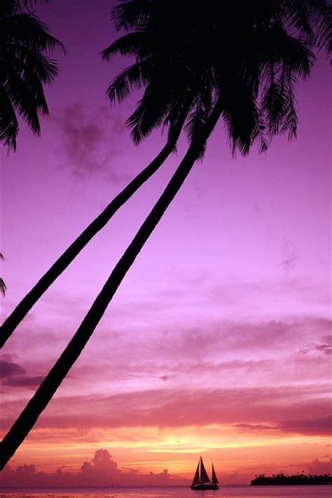wallpaper sunset palm tree silhouette  hd picture image