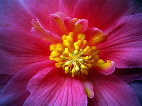 a flower inside of a flower by kmourzenko on deviantart