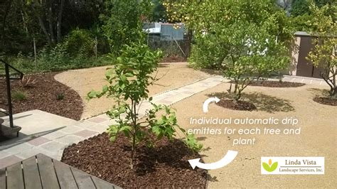 backyard orchard before after renovated california backyard orchard linda vista landscape services inc