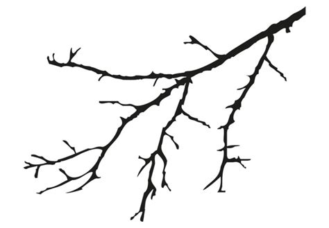 coloring page tree branch tree branches coloring pages clipart best