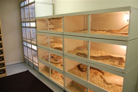 Reptile Rooms by Your Reptile Room Page 8 Pets Herp Stands And Racks