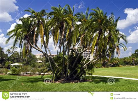 cluster exeter 9 tree palm tree cluster stock images image 6450984