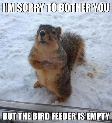 Funny Animal Meme - animal animal animal march 2013