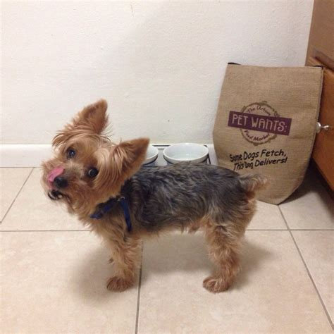 puppy stores in miami pet wants miami 18 photos pet stores 2263 sw 37th ave miami fl phone number