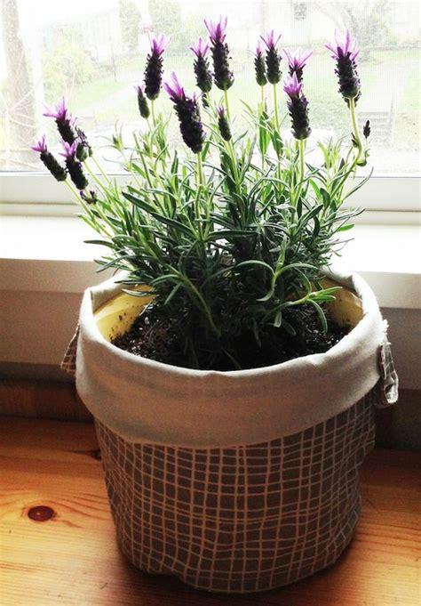 small plants that don t need sun zimmerpflanzen pflegeleicht sorgen sie f 252 r ein gesundes