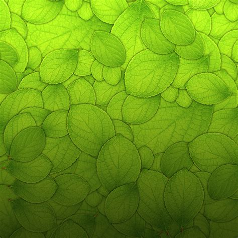 green wallpaper with leaf pattern green leaves texture ipad wallpaper