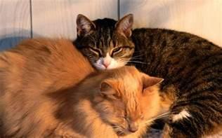 cats home pets wallpaper