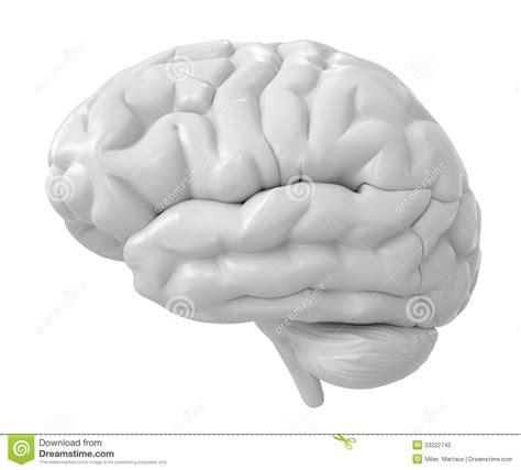 White Brain 3d white brain stock photography image 33222742