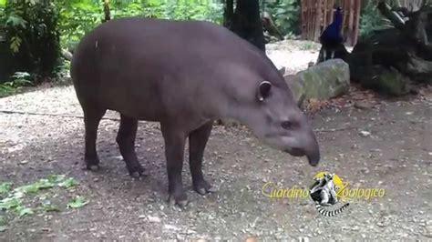 giardino zoologico di pistoia sudamerica al giardino zoologico di pistoia