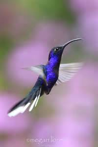what color are hummingbirds