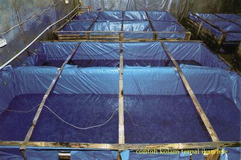 Suplemen Ikan Lele kolam beton organic hcs