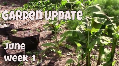 june garden update   zone  midwest vegetable garden