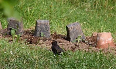 allontanare gatti dal giardino come dissuadere i merli ed allontanarli dal mio giardino