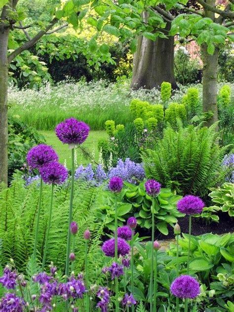 flowers for the shade garden best 25 ferns garden ideas on allium autumn