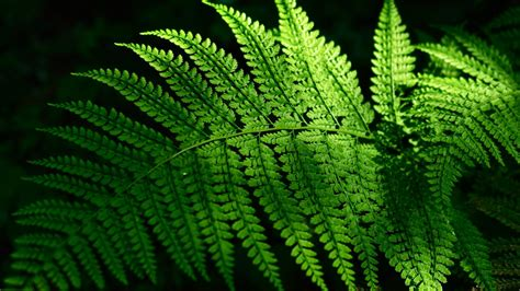 nature leaves sunlight ferns wallpaper allwallpaperin