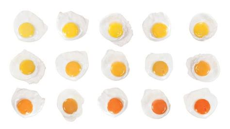 world s most disgusting color code different yolks for different folks why we judge an egg