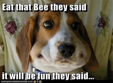 puppy stung by bee 20 dogs stung by bees gallery ebaum s world