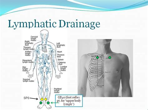 Lymphatic Drainage Detox by Acupuncture Points That Support Lymphatic Drainage