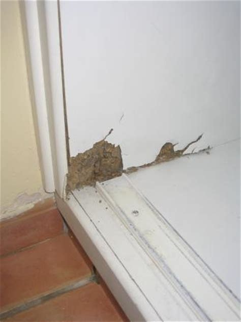 Bugs In Closet by In Closet Bugs Crawling In And Out Picture Of Cayo
