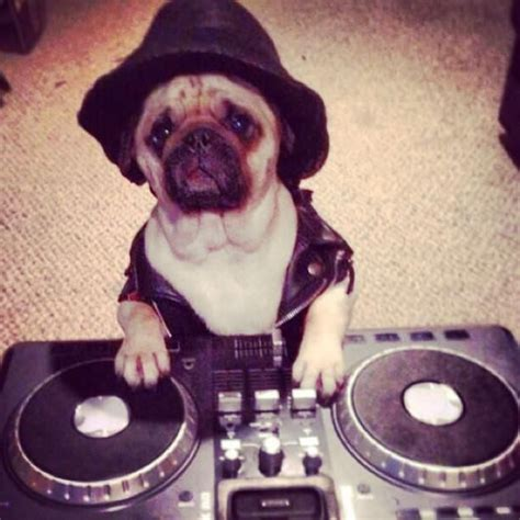 dj s dogs dj pugster my favorite dj animals dogs and ps