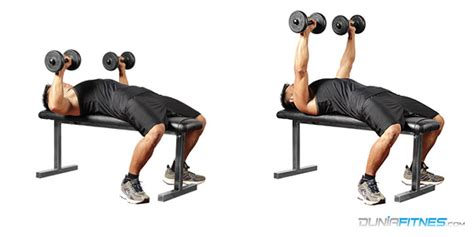 db flat bench press chest duniafitnes com