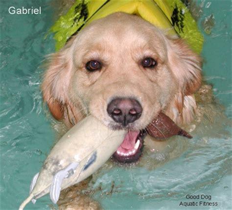 what is a good house dog good dog aquatic