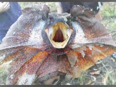 imagenes de animales raros animales raros youtube