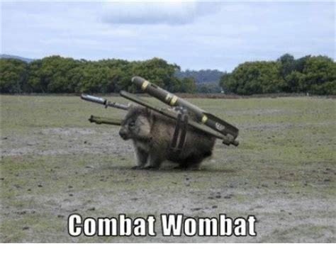 combat wombat wombat meme on me me