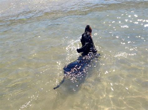 boat harbour kurnell dog friendly dog friendly sydney visiting sydney with a dog travelnuity